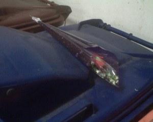 Terkesima sebentar melihat bunga ros ini.. kasihan si lelaki yang menjadi mangsanya