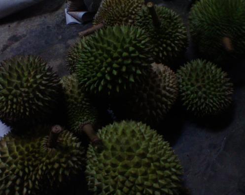 Ini durian dari rumah bakal mak mertua.. terima kasih..