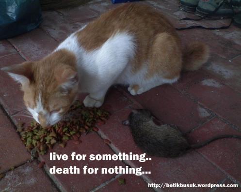 kasihan.. tikus itu barang mainan.. bukan makanan si oren