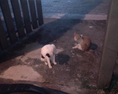 apabila lapar, mereka menunggu di hadapan pintu pagar lalu membuat pelbagai aksi..hendak sahaja aku langgar tetapi mereka sungguh kiut